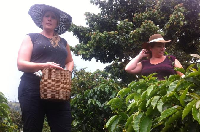 Day Tour to Medellín, Countryside and Coffee Region