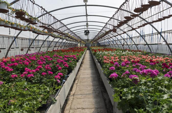 Santa elena day trip silleteros and flower farm cultural tour in medell n 169871