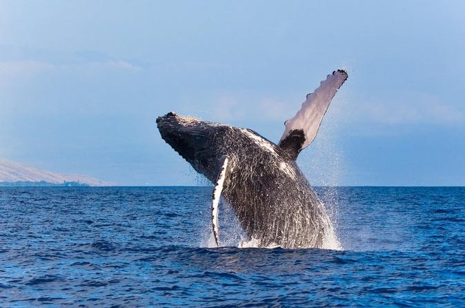 Whale Watching Adventure from Grand Turk