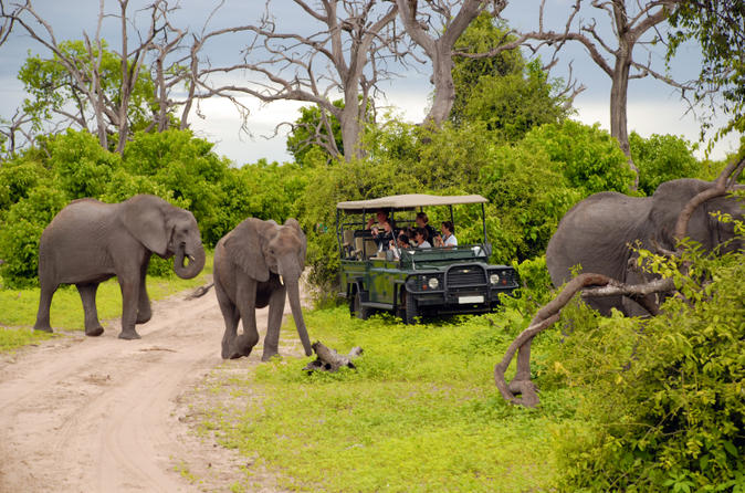Chobe national park day trip game drive and river cruise in victoria falls 145497