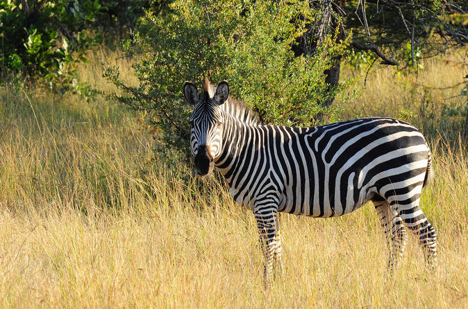 Game drive in stanley and livingstone private reserve with transport in victoria falls 143476