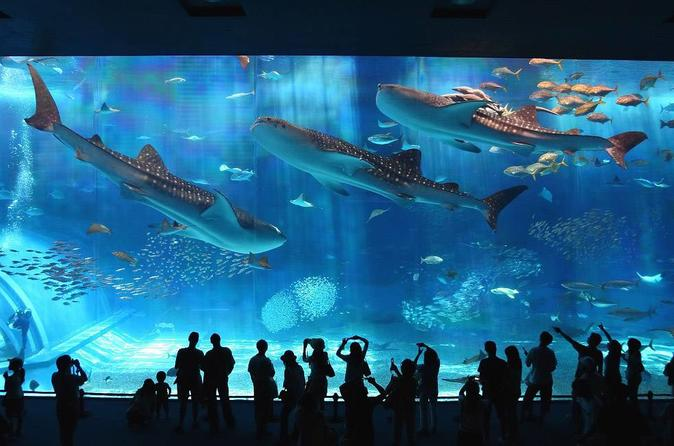 General Admission to Okinawa Churaumi Aquarium