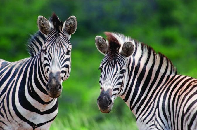 Hluhluwe Umfolozi Park Day Trip from Durban
