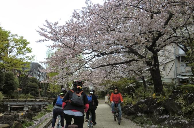 Tóquio de bicicleta: Skytree, Jardim de Kiyosumi e Sumo Stadium