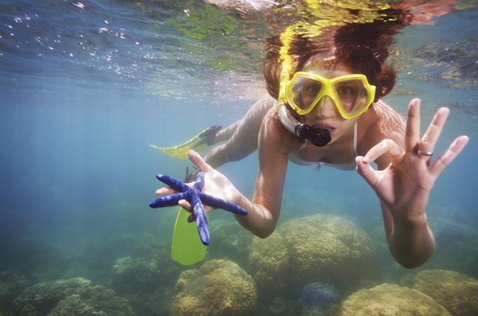 Excursão de snorkel em Cozumel saindo de Cancun: Recifes de corais e Playa Mia Beach Park