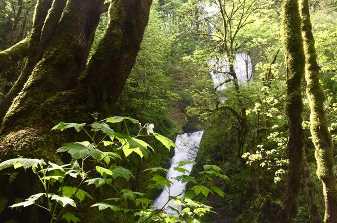 Hiking and Biking: Columbia Gorge Hidden Waterfalls