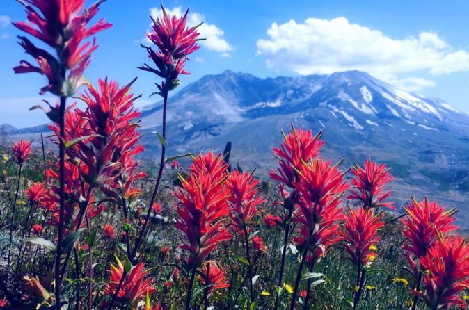 The BEST Mount Saint Helens Tour