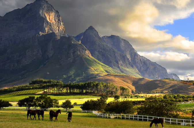 Franschhoek Wine Tram and Town Exploration Day Tour