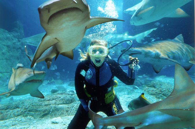 Sunshine Coast Underwater World SEA LIFE Aquarium Entrance Ticket with Shark Dive Xtreme
