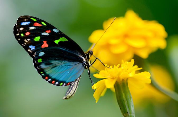 Risultati immagini per Valle delle Farfalle di Rodi