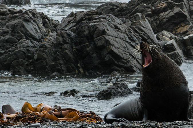 Seal Coast 4WD Safari