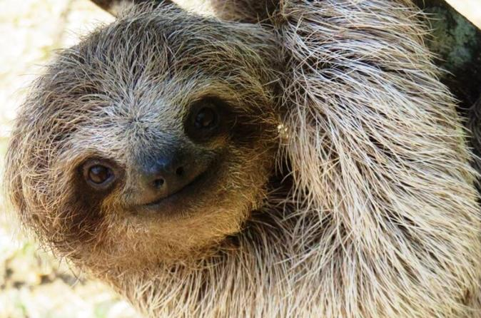 Sloth Experience and Cultural Towns Half Day Trip from San Jose