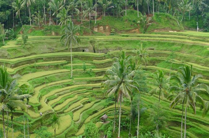 Ubud Tour With Private Car And Tour Driver - Kuta