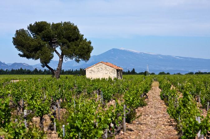 Excursão na vinícola Concha y Toro saindo de Santiago
