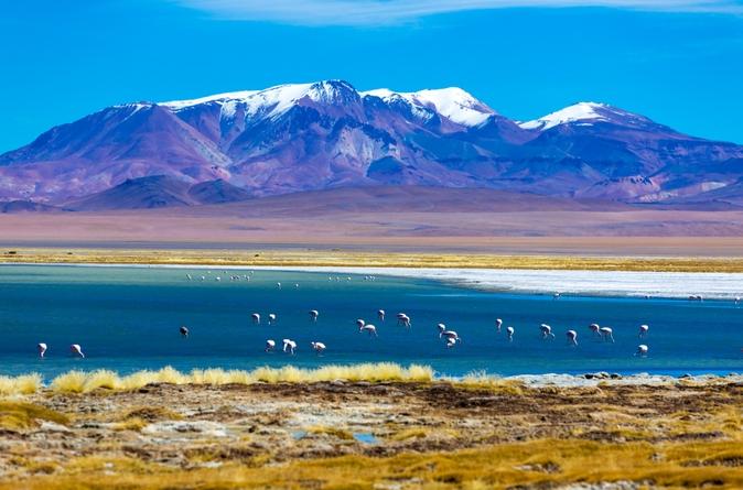 Viagem de Um Dia ao Salar de Atacama, saindo de San Pedro de Atacama, incluindo a Reserva Nacional Los Flamencos e a Vilarejo de Socaire