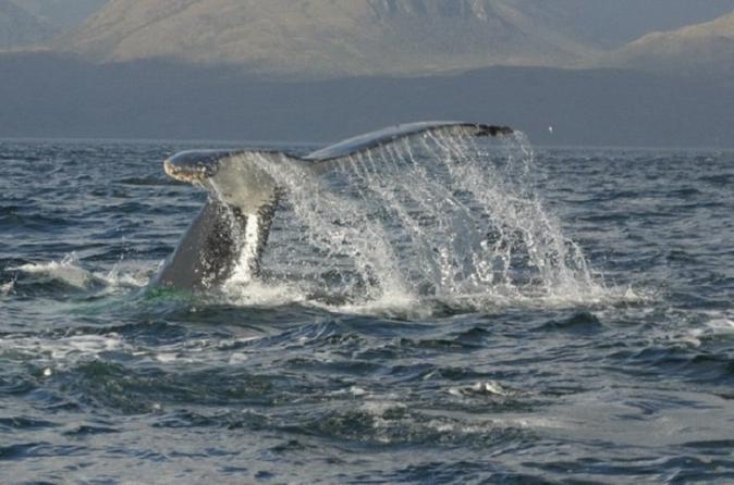 Whale Watching Day Trip from Punta Arenas