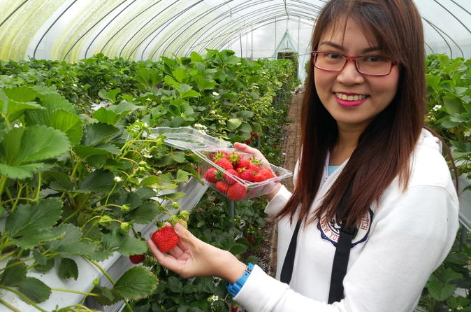 Strawberry Farm Tour from Seoul