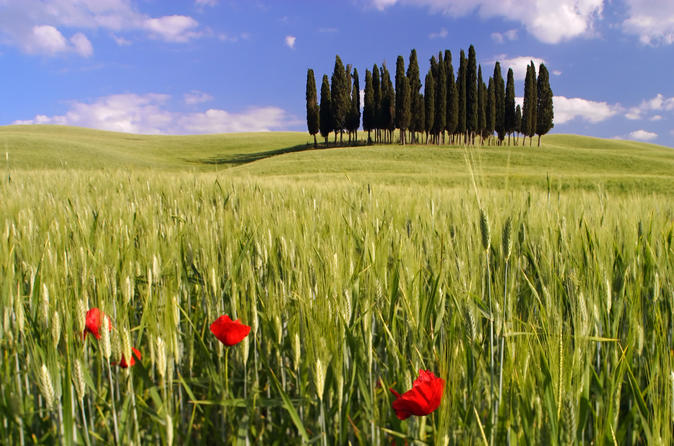Montalcino, Orcia Valley, Pienza and Montepulciano: Wine and Cheese Tasting Guided Tour from Florence