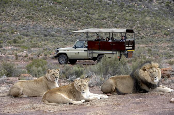 Aquila Game Reserve, Full Day With Private Transport - Cape Town