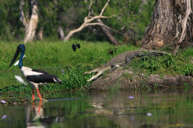 Corroboree Billabong Wetland Cruise from Darwin Including Lunch