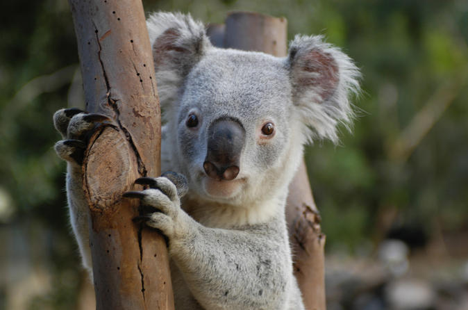 Featherdale Wildlife Park, Sydney