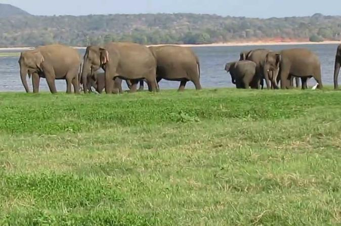 Day Excursions To Minneriya National Park From Colombo