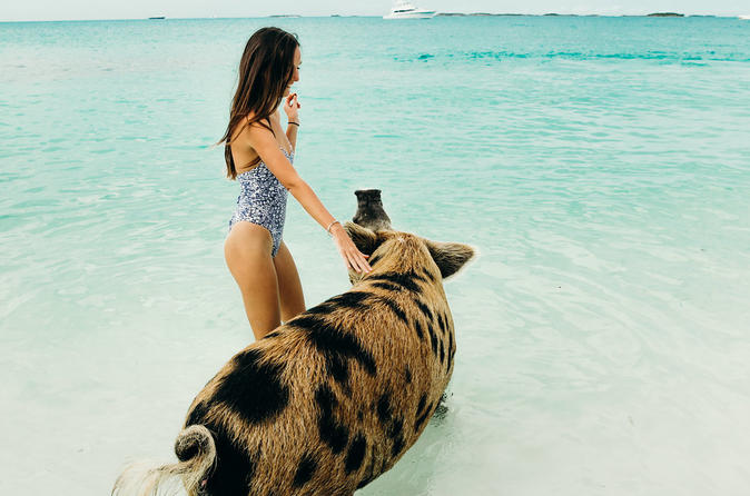Exuma Cays Swimming Pigs and More Half Day Tour - Fly In From Nassau, Bahamas