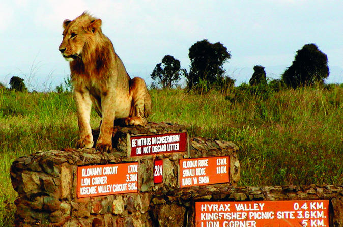 Private Half Day Nairobi National Park Tour From Nairobi