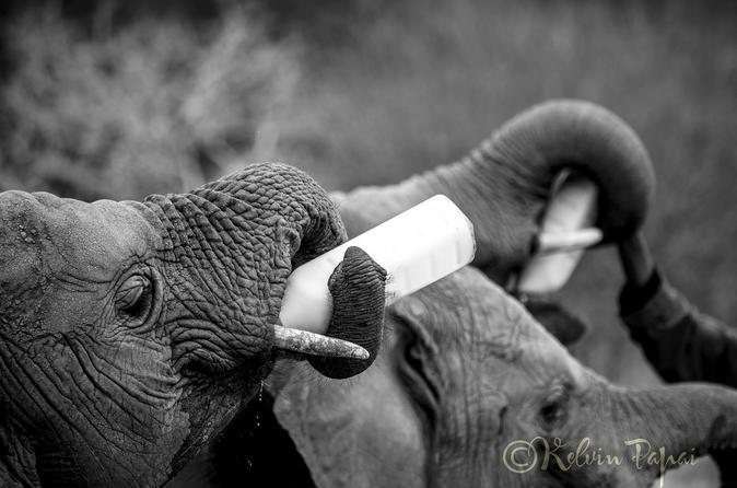 In the footsteps of Elephants - Nairobi, Ithumba, Umani Springs and Amboseli