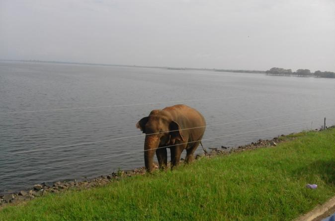 Sri Lanka 11-Day Sightseeing Tour Package - Colombo