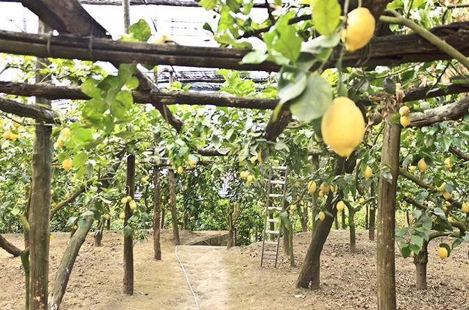 Experiência em fazenda em Sorrento, incluindo degustação, produção de pizza e limoncello
