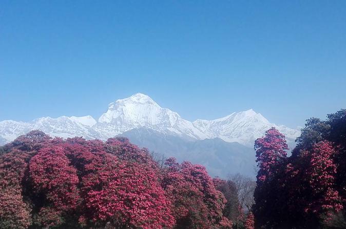 Ghorepani Poon Hill Trek - Kathmandu