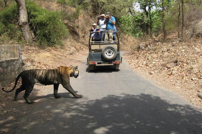 TIGER TOUR WITH GOLDEN TRIANGLE - HOTEL & CAR INCLUSIVE PRIVATE - Delhi