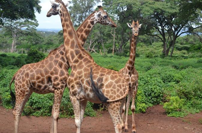 1 Full-Day Nairobi National Park, Elephant Orphange, Giraffe Centre,Karen Blixen Museum And Kazuri Beads Factory  Tour from Nairobi