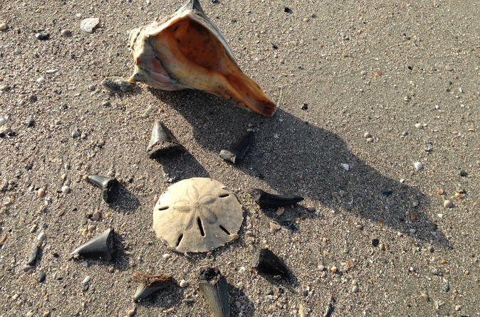 Shell Hunting Expedition on Morris Island