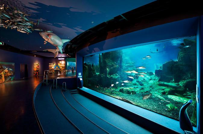 Admission Ticket To Istanbul Aquarium