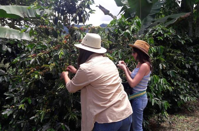 Coffee Tour in the beautiful Jardin town (Full-Day)