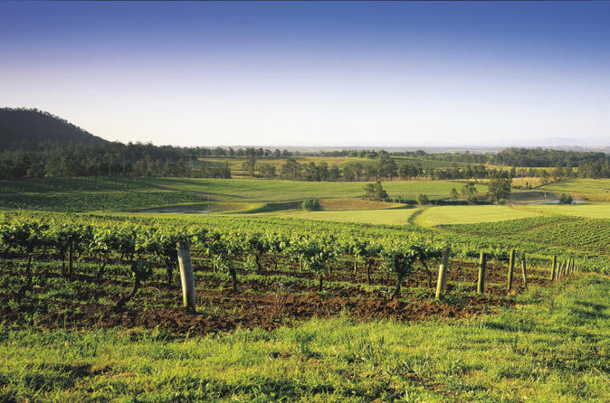Hunter Valley Food and Wine Tasting Day Tour from Sydney