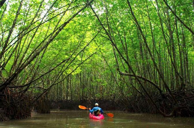 Mangroven-Kajak