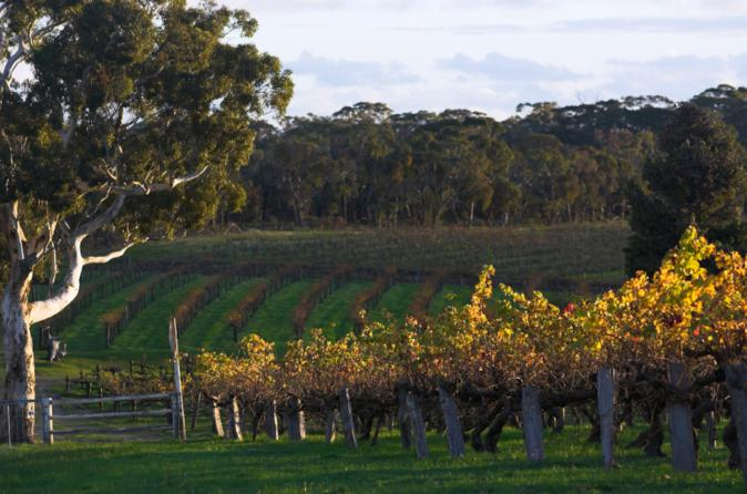 Barossa valley with hahndorf tour from adelaide in adelaide 124927