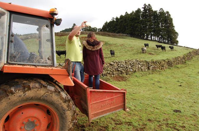 Rural Morning - Terceira