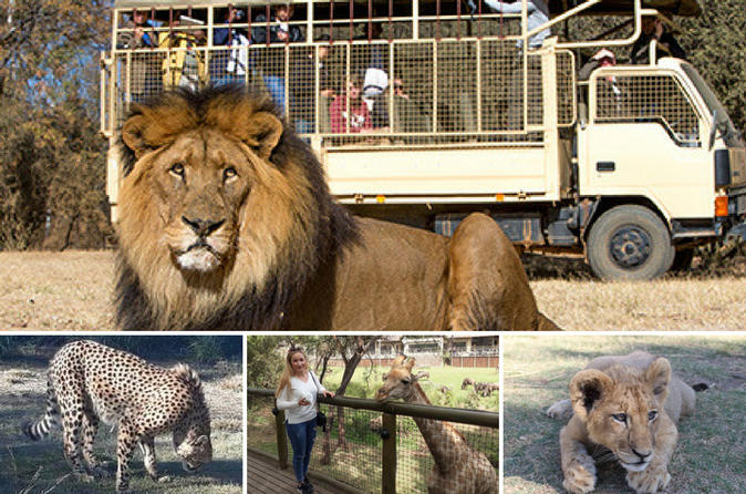 The Lion and Safari Park