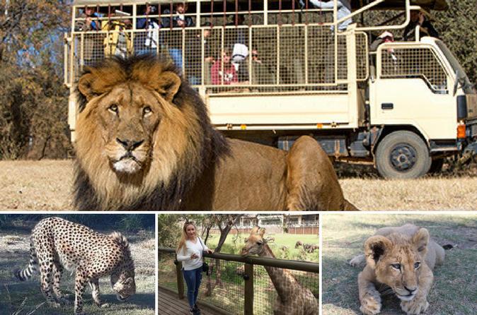 The Lion and Safari Park