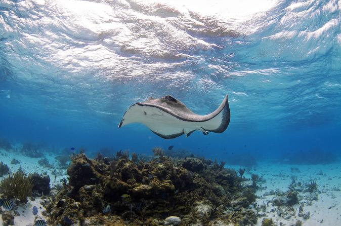 Stingray Encounter and Beach Day from Nassau