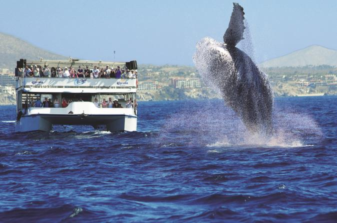 Los Cabos Whale Watching Cruise Including Breakfast - Cabo San Lucas