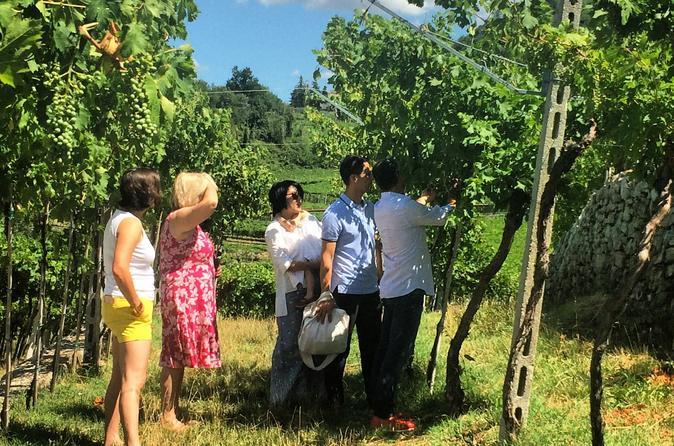 Experience The Valpolicella, The Land Of Amarone! - Verona