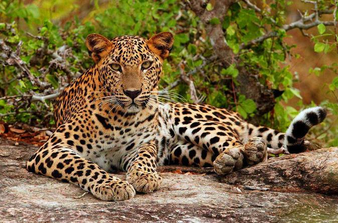 Half day trip to Yala national park Safari