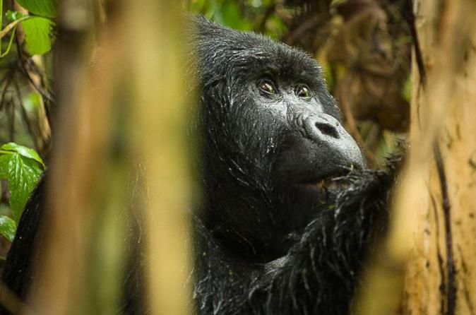 3-Day Gorilla Trekking Plus Relaxation In Lake Bunyonyi