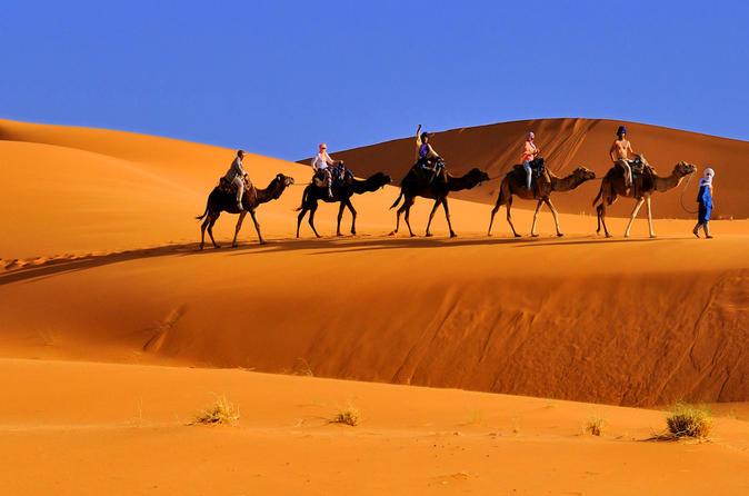 Marrakech Camel Ride - Marrakesh