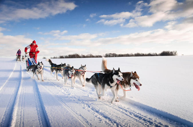 Lapland Husky Sled Ride From Yllas